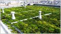 「壁面・屋上緑化サービス」